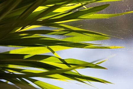 narrow palm leaves from indoor plant against window pane with blurry background 版權商用圖片