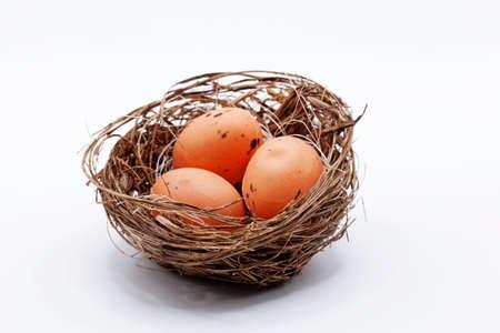 bird's nest with three eggs in studio light