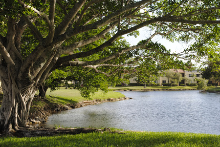 A Lake in Florida