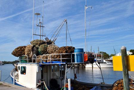 pinellas: Sponge diving boat