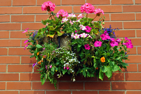 Hanging basket with bedding plants Stock Photo