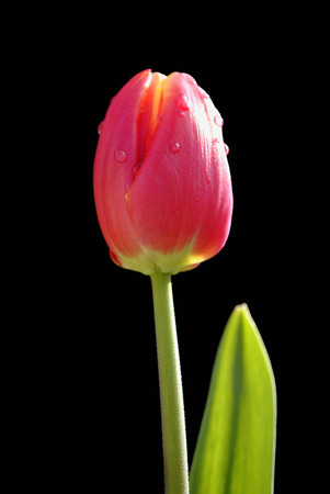 elite: Tulipa Apeldoorn Elite