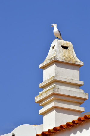 barlavento: A typical Portuguese chimney pot with a seagull on top