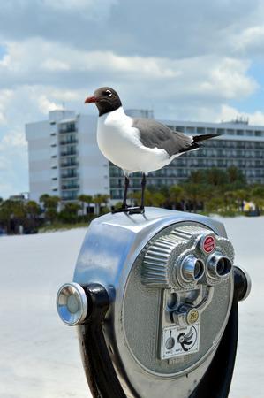 marine bird: Gull-billed Tern standing on top of a viewfinder scope