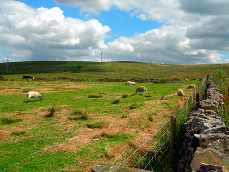 Sheep in Pick up Bank, Darwen, England UK