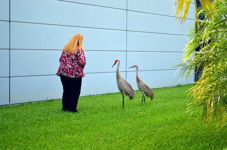 canadensis: Lady with two Sandhill cranes Latin name Grus canadensis Stock Photo