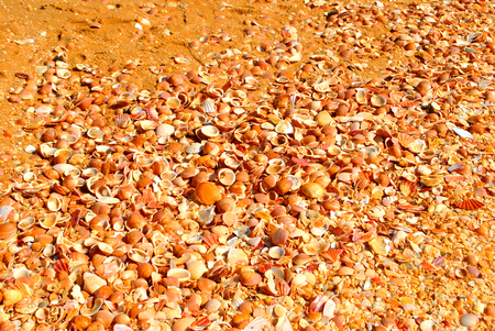 algarve: Benagil Beach shells on the Algarve coast