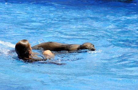 sea lion: Girl swimming with a sea lion in Miami Seaquarium Florida