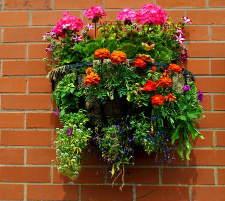 hanging basket: Hanging basket with bedding plants Stock Photo