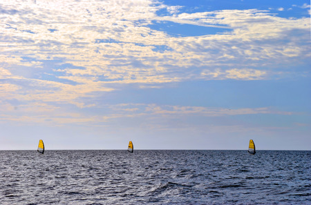 sailboard: Three windsurfers in the Gulf of Mexico