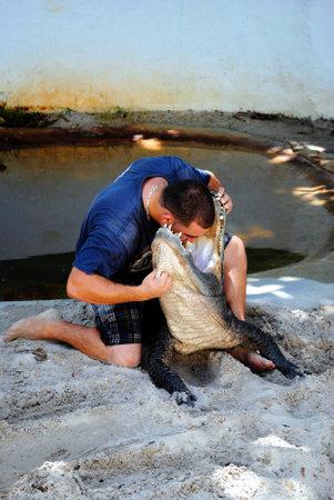 Everglades national park: Everglades National Park, Florida, USA - May 30, 2011 : American alligator wrestling in the Everglades National Park Editorial