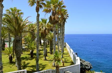 bottlenose: Callao Salvaje coast in Adeje Tenerife
