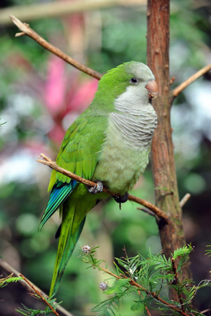 Green parrot perched on the branch of a branch Stock Photo