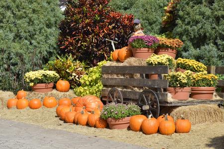 Arrangement of pumpkins around am old farm wagon