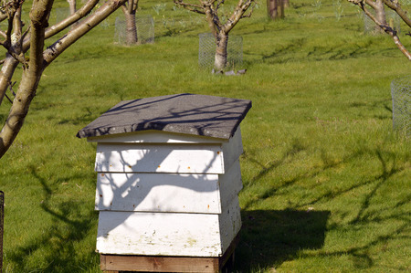 Beehive used for the purpose of production of honey and, pollination of nearby fruit trees