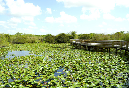 importance: Anhinga Trail through the Everglades National Park in Florida