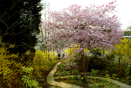 Spring flowers in a garden in early spring Banque d'images
