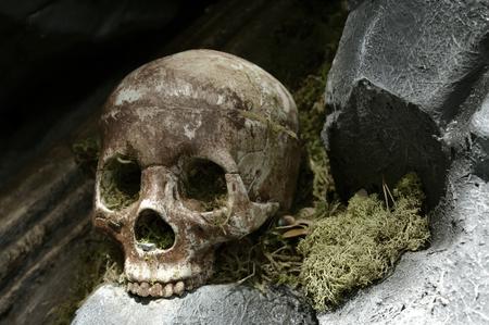 A single human skull on display