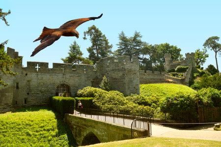 Common buzzard in flight over Warwick Castle