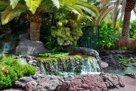 Tropical water garden in La Oliva, Fuerteventura one of the Canary Islands