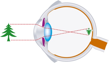 receptor: vision, eyeball, optics, lens system