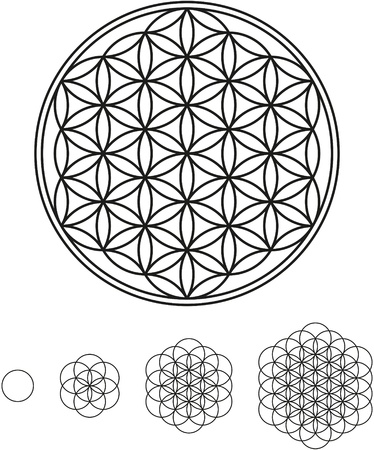 Flower Of Life Development Vector