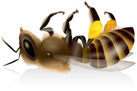 Dead Honey Bee Illustration