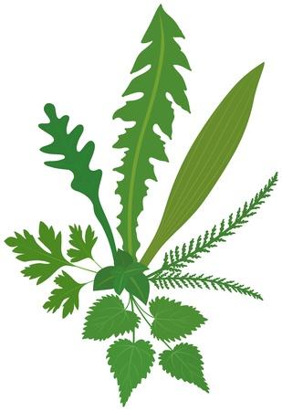 alternatively: Un bouquet di erbe prato isolato vettoriale su sfondo bianco Vettoriali
