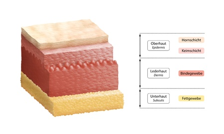 in layers: Cross-section illustration of human skin, composed of three primary layers  epidermis, dermis and subcutis  German Labelling