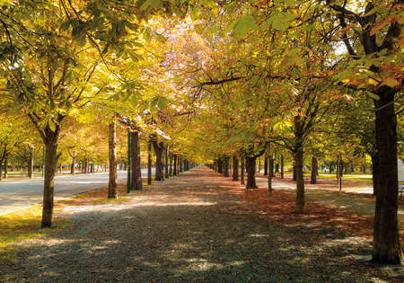 alignments: Long chestnut avenue in early autumn  The alignments meet harmoniously in the center of the image