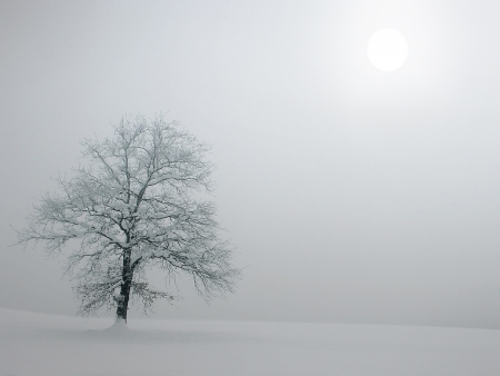Tree in foggy winter landscape  Very gently the sun is shining through the mists  photo