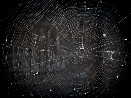 kaput: Old, raddled spiderweb, in which many insects are trapped  Stock Photo