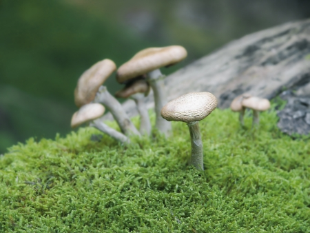 toxic mushroom: A few mushrooms  tranquility in humid moss