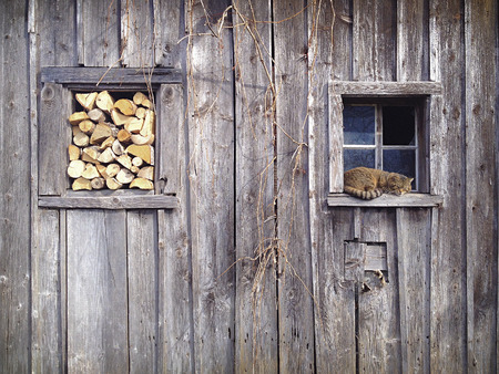 Snoozing cat in a window frame of a very old shed  In the other window frame there is some stacked firewood