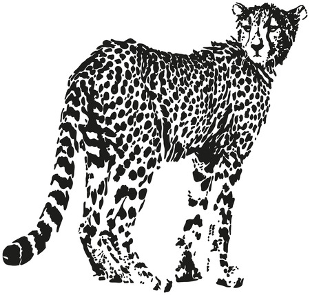 Leopard - Big cat shaped from black spots - optical illusion  Vector
