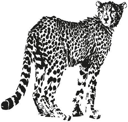 jaguar: Leopard - Big gato en forma de puntos negros - ilusión óptica