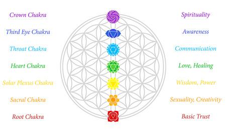 I sette chakra principali e il loro significato, che si abbinano perfettamente sulle giunzioni del Fiore-di-vita-Symbol - sfondo bianco Vettoriali