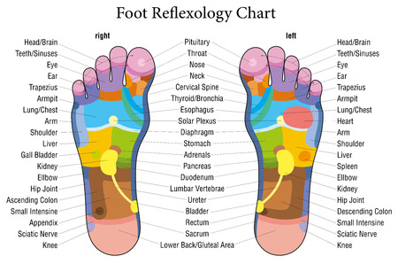 dolore ai piedi: Tabella Riflessologia del piede, con descrizione accurata dei corrispondenti organi interni e parti del corpo Illustrazione vettoriale su sfondo bianco