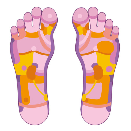masseuse: Foot reflexology illustration with different pink and orange colors concerning the corresponding internal organs and body parts  Vector illustration over white background