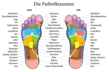 massage therapie: Voetreflexologie grafiek met accurate beschrijving Duitse etikettering van de overeenkomstige interne organen en lichaamsdelen Vector illustratie op witte achtergrond