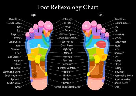 reflexologie plantaire: Pied diagramme de r�flexoth�rapie avec description pr�cise des organes internes correspondants et les parties du corps Illustration