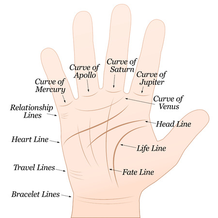 Palmistry - Right hand with lines and their names   Vector