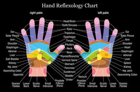 Gráfico de reflexología de la mano con la descripción exacta de los correspondientes órganos internos y partes del cuerpo ilustración vectorial sobre fondo negro