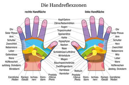 manicurista: Gr�fico de reflexolog�a de la mano con la descripci�n exacta de los correspondientes �rganos internos y partes del cuerpo ilustraci�n vectorial etiquetado alem�n sobre fondo blanco