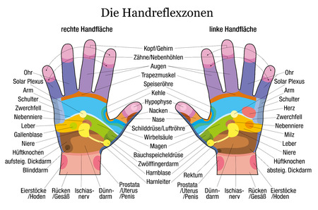 reflexology: Hand reflexology chart with accurate description of the corresponding internal organs and body parts  German labeling  Vector illustration over white background