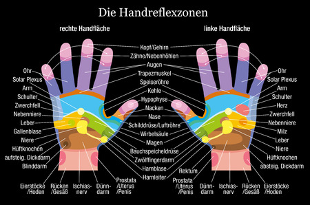 masseuse: Hand reflexology chart with accurate description of the corresponding internal organs and body parts  German labeling  Vector illustration on black background
