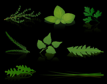 Various herbs - thyme, basil, parsley, yarrow, stinging nettle, dandelion, rocket and chives  Isolated vector illustration on black background