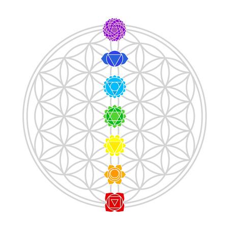 Zeven belangrijkste chakra's passen perfect op de kruispunten van de Flower of Life