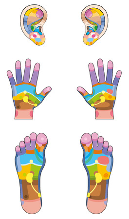 zones: Reflexology zones - ears, hands and feet colored with the corresponding internal organs and body parts. Vector illustration over white background.