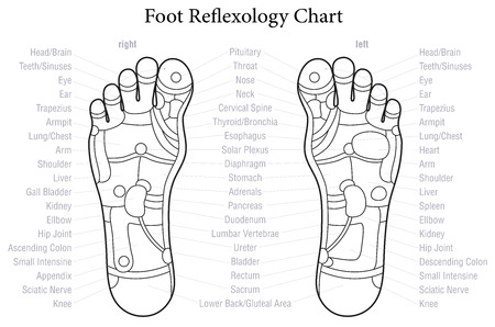 reflexology: Foot reflexology chart with accurate description of the corresponding internal organs and body parts. Outline vector illustration over white background.